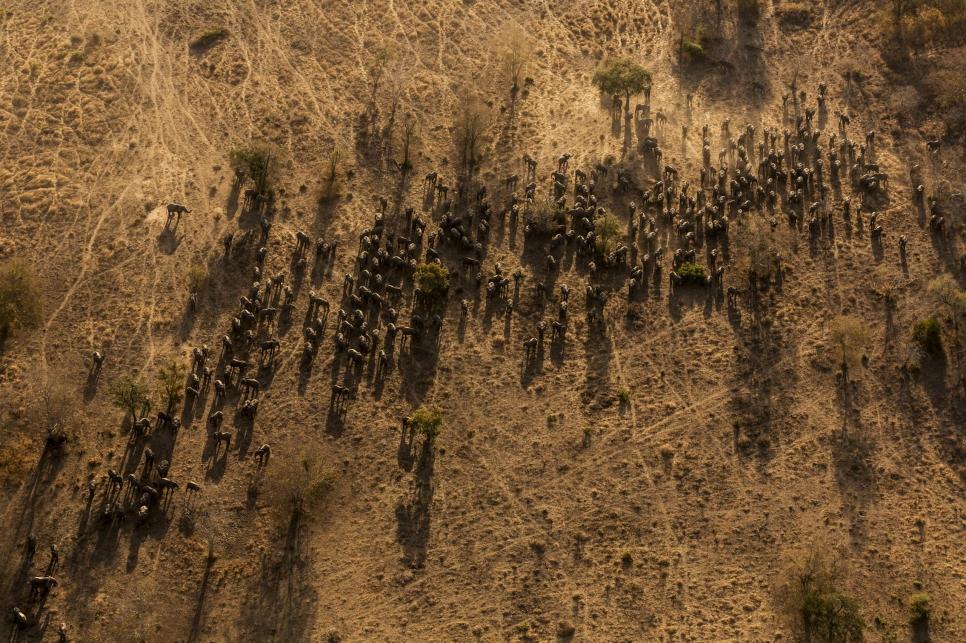 Фото: Brent Stirton, South Africa