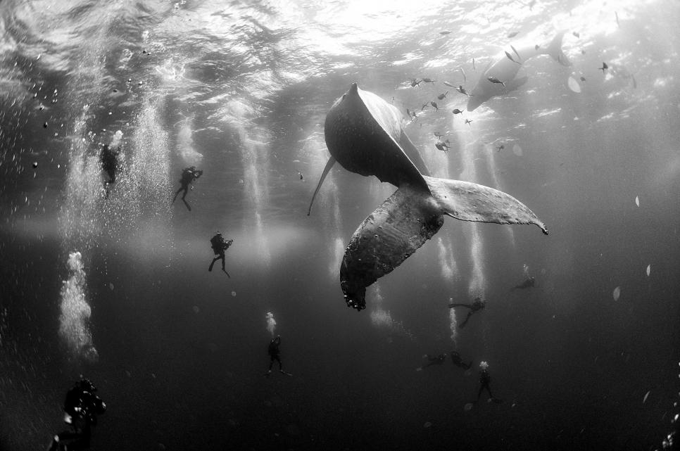 Фото: Anuar Patjane Floriuk, Mexico
